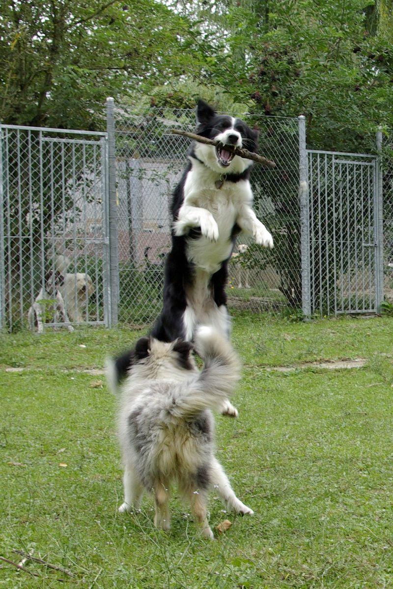 Pension canine et féline